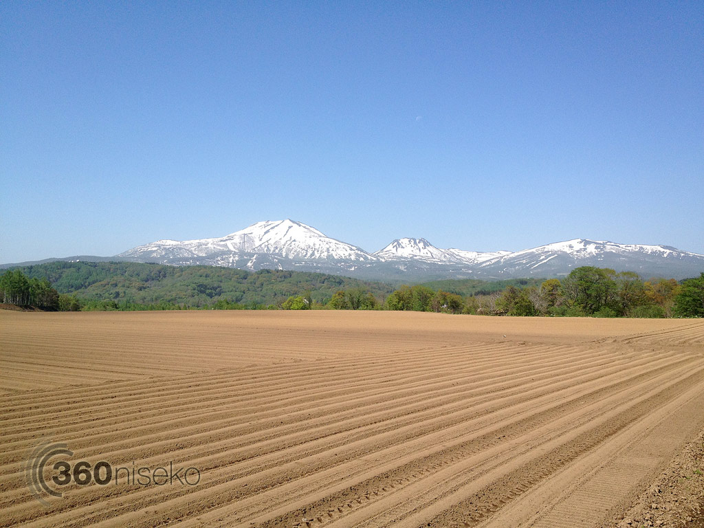 A field about to explode with Mt.Annupuri in the background! 31 May 2013