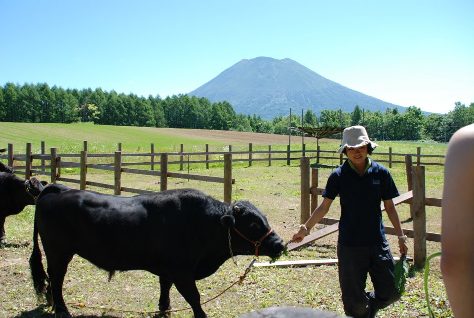 edventure-niseko-summer-camp-farm-visit