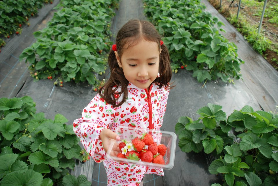 edventure-niseko-summer-camp-fruit-picking
