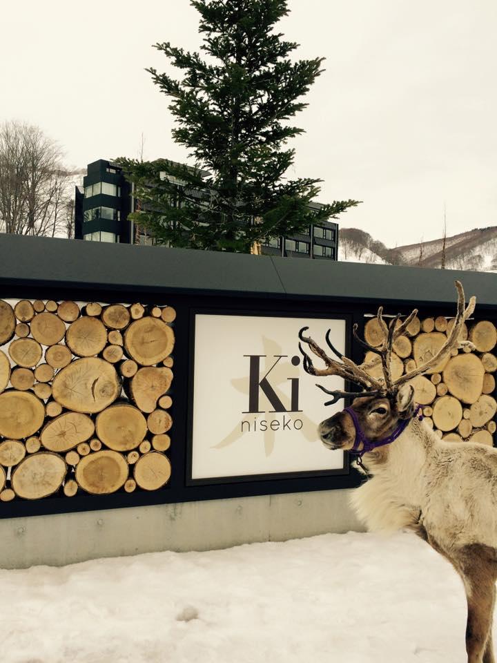 Mr Reindeer at Ki Niseko!