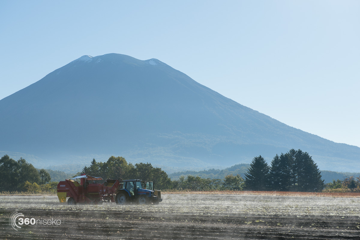 Harvesting potatoes, 6 October 2015