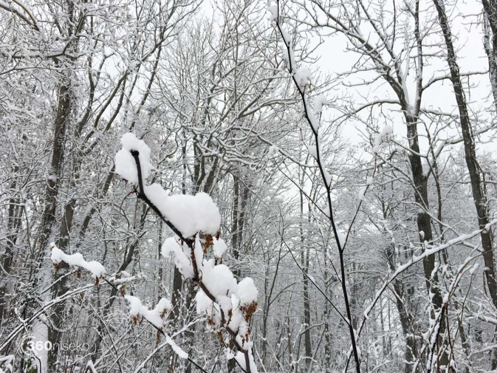 Snow clinging to everything, 5 November 2016