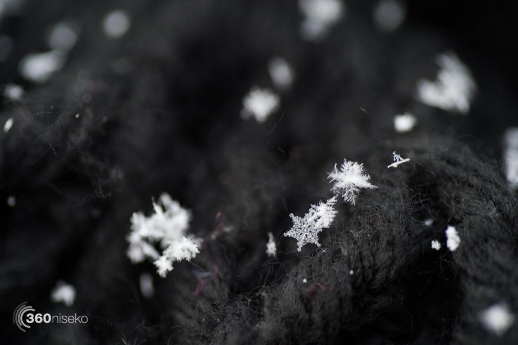 Snowflakes 2, 14 February 2017