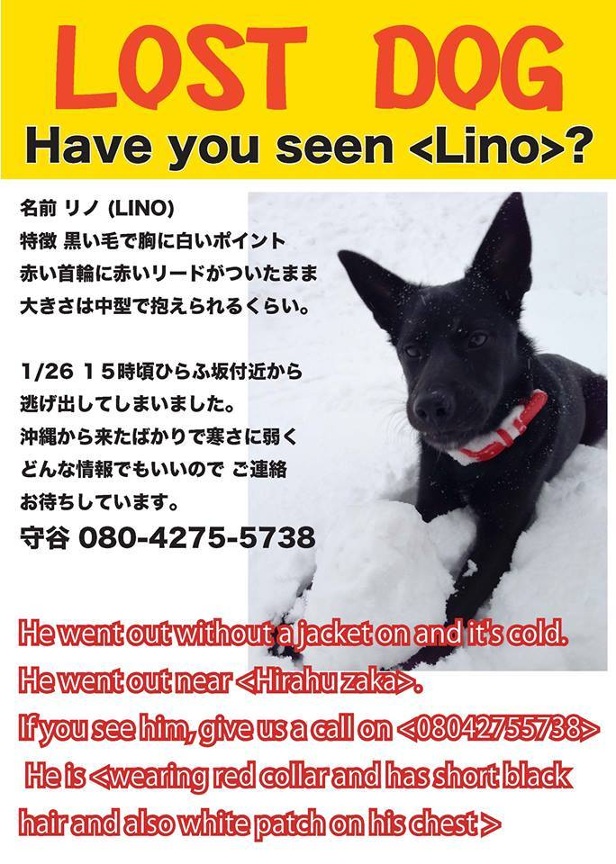 Lost-Dog-Lino-Hirafu-140126-poster