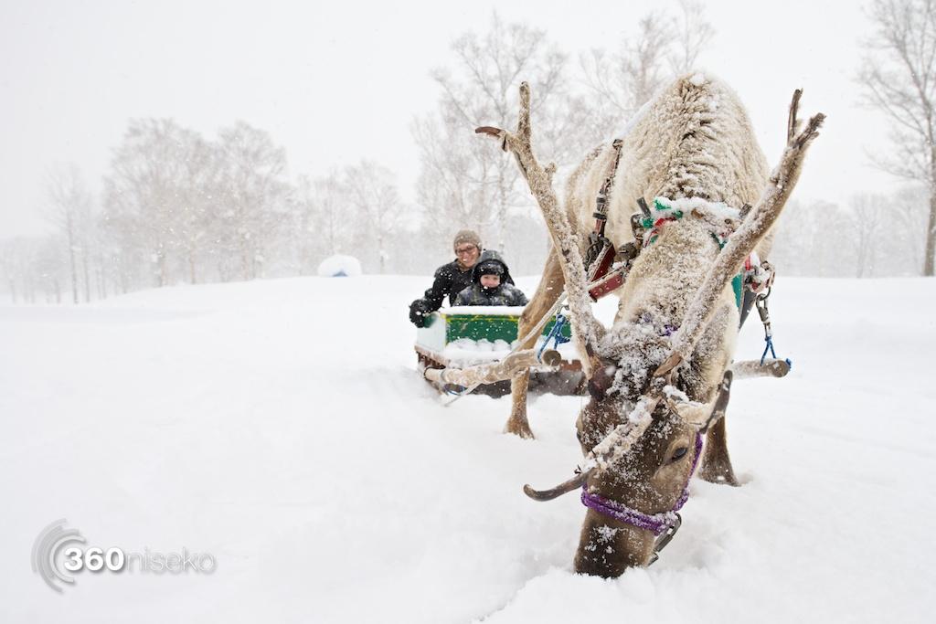 Niseko-village-reindeer-sledding-2
