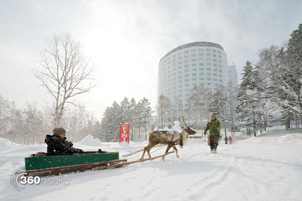 Niseko-village-reindeer-sledding-3
