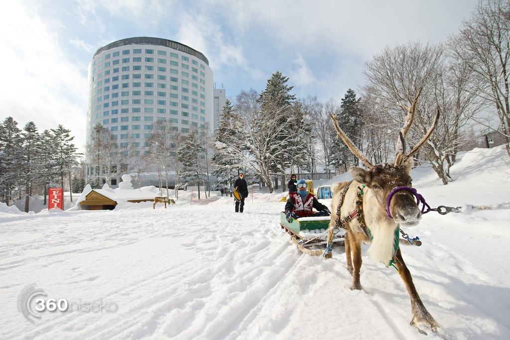 Reindeer Sledding at Niseko Village