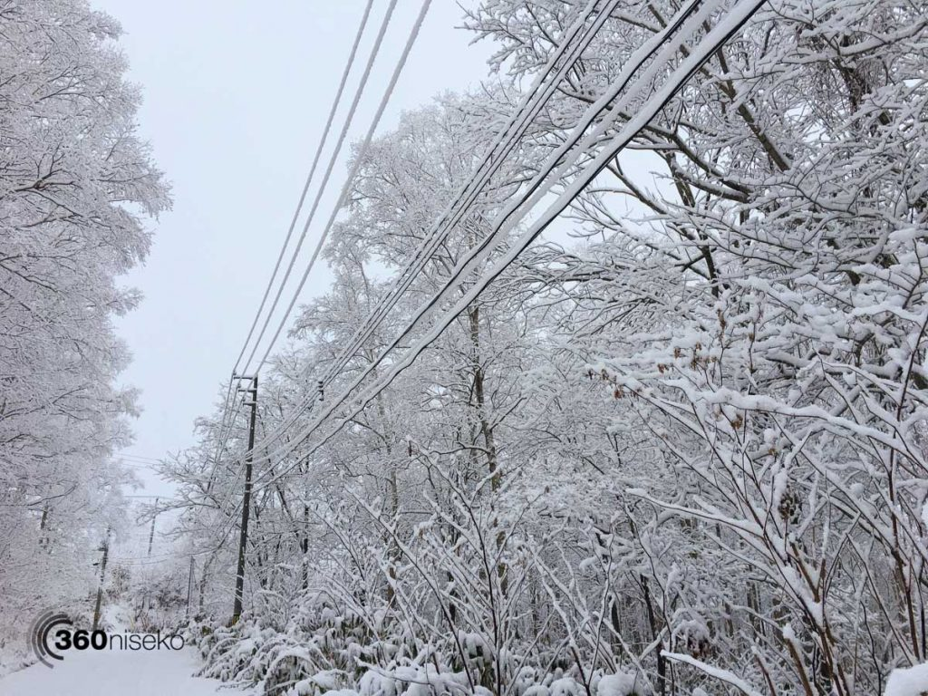 Snow clinging to everything including power cables, 16 November 2017